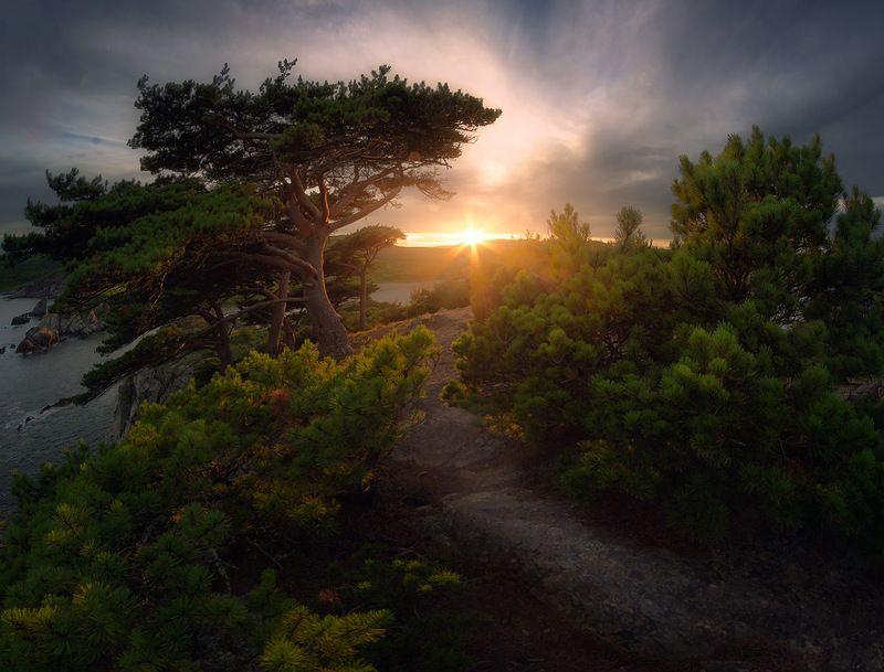 приморский край море солнце рассвет владивосток заповедник скалы Реликтовые сосныphoto preview