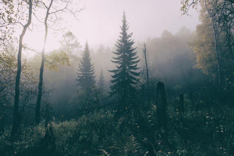 россия, красноярск, сибирь, столбы, фото, природа, путешествия Туманный лес. Столбыphoto preview