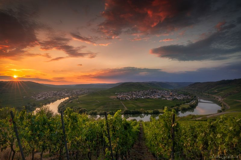 bow tie, bushes, church, evening, germany, grapes, horseshoebend, leiwen, loop. bow, mosel, mosel horseshoebend, mosel wine, mosele wine, moselle, moselle valley, moselschleife, orange, outdoors, pink, ribbon, river, summer, sunset, sunstar, town, trees,  Moselle Intoxicationphoto preview