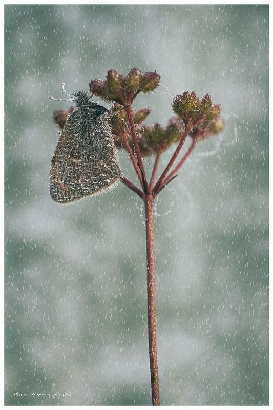 macro nature butterfly Stand in the Stormphoto preview