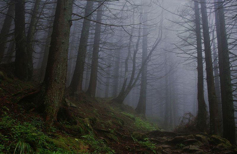 Призраки лесаphoto preview