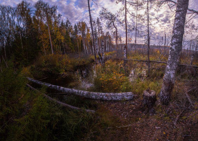 болото, россия, иваново, лежнево, пейзаж, закат Болотоphoto preview