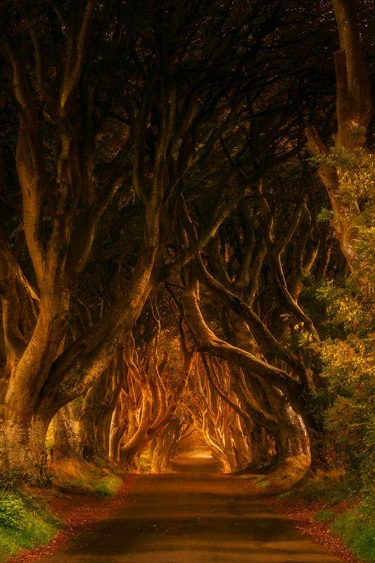 Dark Hedges, Ireland, Northern Ireland, Sunrise, Sunset Dark Hedgesphoto preview