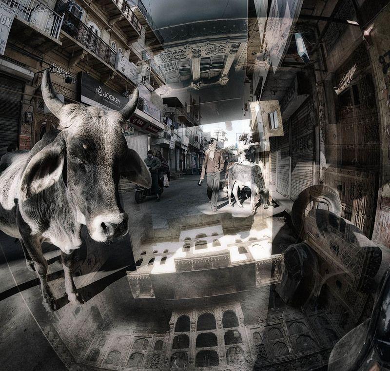 индия, раджастан, джайсалмер, хавеллы, улочки Про коровуphoto preview
