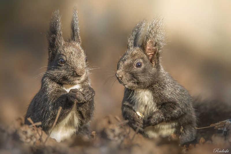 Cute squirrelsphoto preview