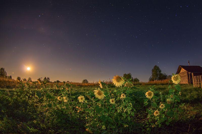 звезды луна подсолнухи деревня ночь под звездами. Заход луныphoto preview