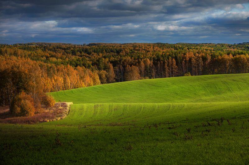 пейзаж, поле, небо, облака, лес, nature, landscape photo preview