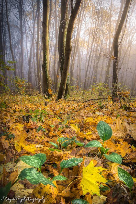 #bulgaria #autumn #осень #sunrise #vitosha #mountains #sofia В объятиях осениphoto preview