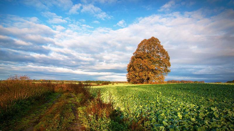Красивые картинки с осенними цветами и добрым утром эту надпись