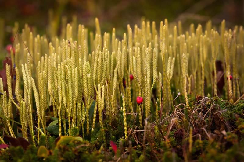 мох, трава, осень Без названияphoto preview