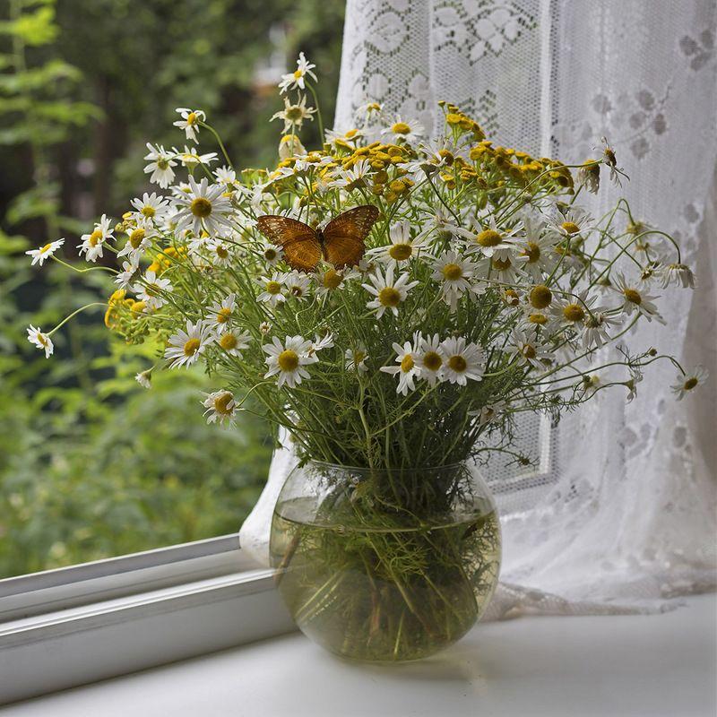 полевые цветы, окно, занавеска photo preview