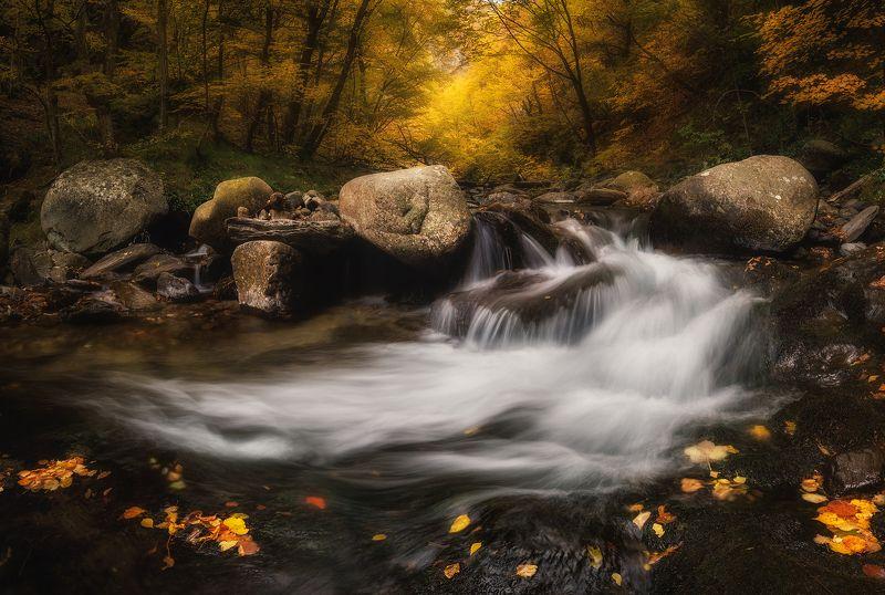 Oсень пришлаphoto preview