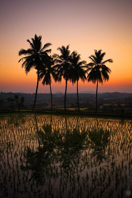 пальма, закат, спокойствие, экзотика пальмы после закатаphoto preview