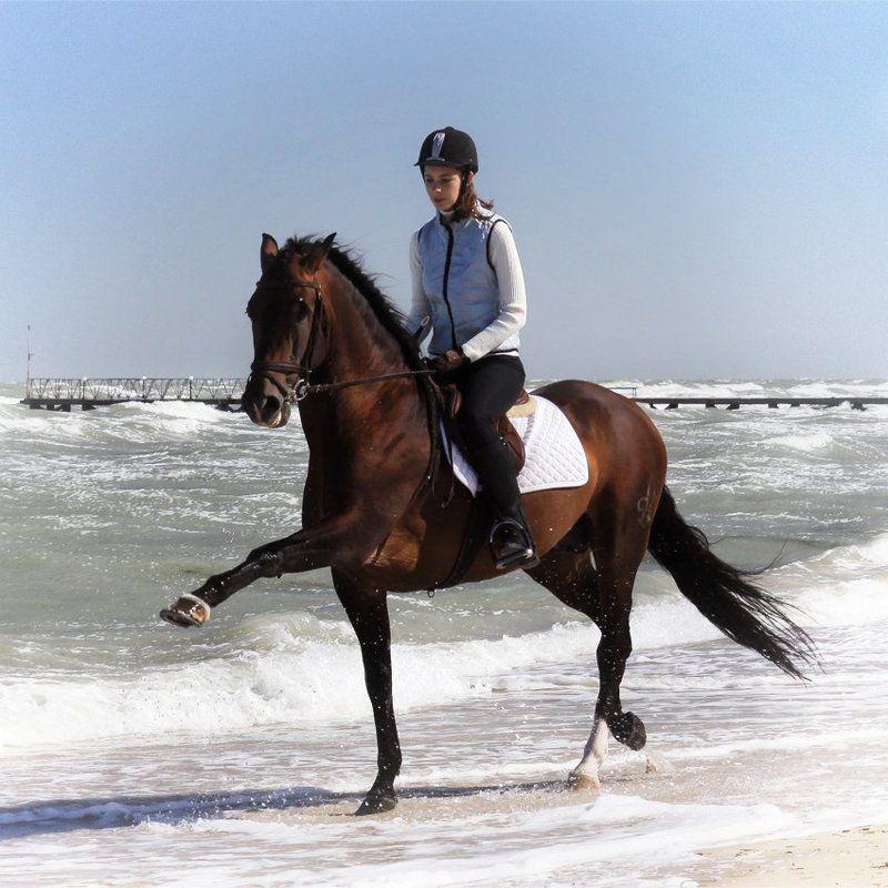 лошади, horse моя настоящая работаphoto preview