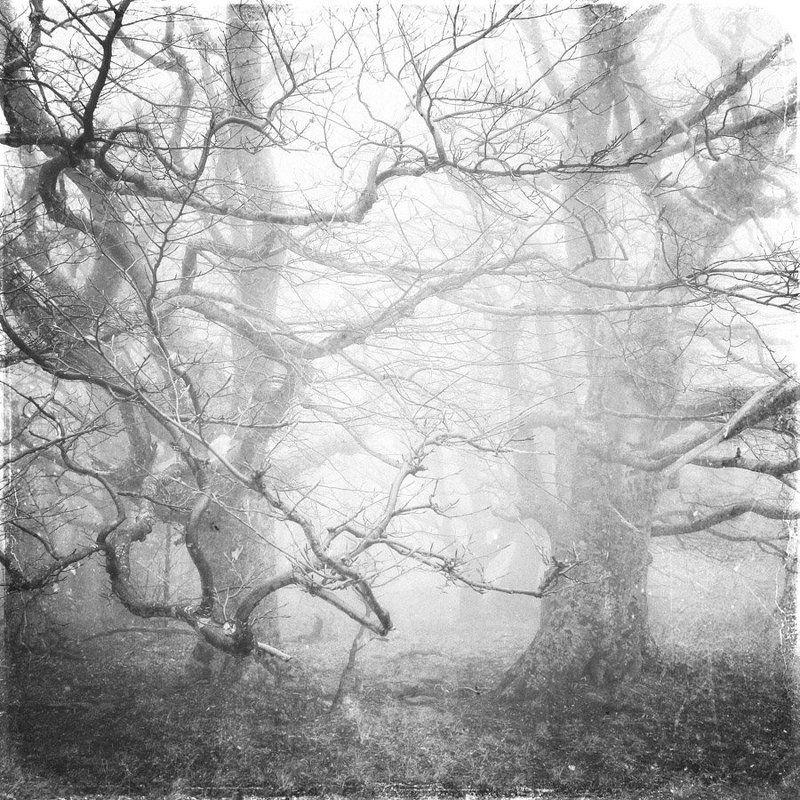 пейзаж, туман, деревья Ж Жphoto preview