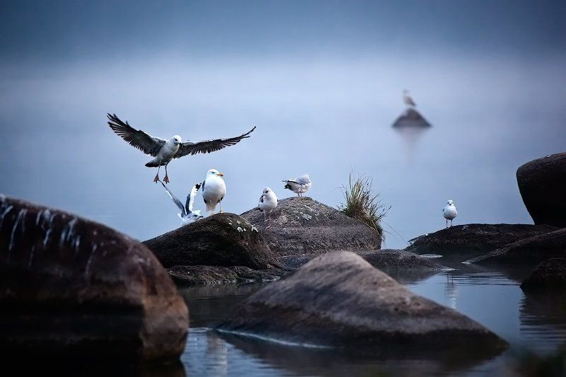 чайка, сценка Gull\'s lifephoto preview