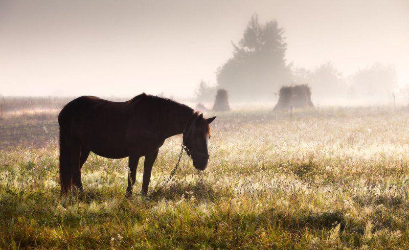 туман , лошадь , осень Осенняя пасторальphoto preview