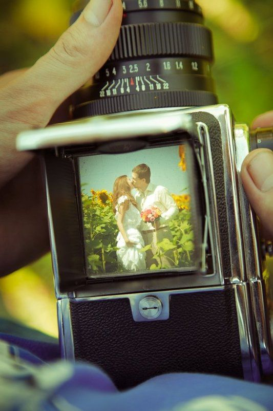 свадьба, портрет, подсолнухи, салют ...photo preview