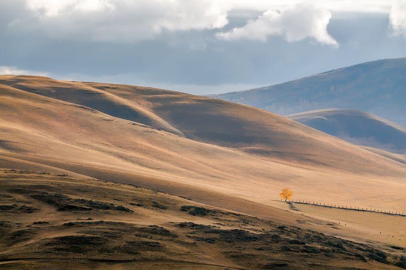 осень, урал, горы, березка Меланхолия осениphoto preview