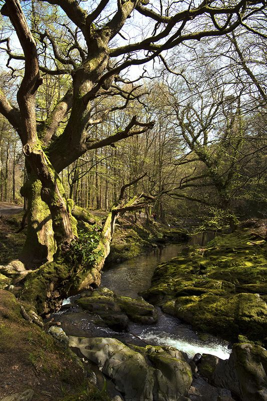 Весна в Tollymore forest park Северная Ирландияphoto preview