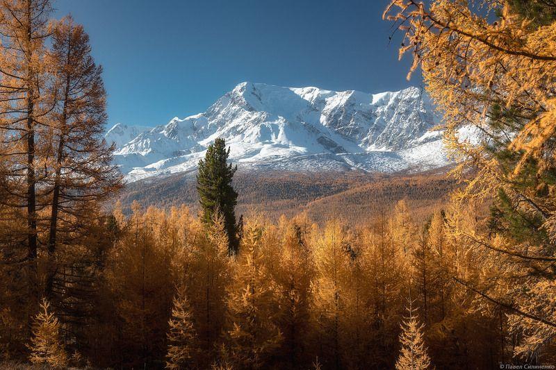 пейзаж, осень, лес, свет, солнце, желтый, алтай, горы Куркурекphoto preview