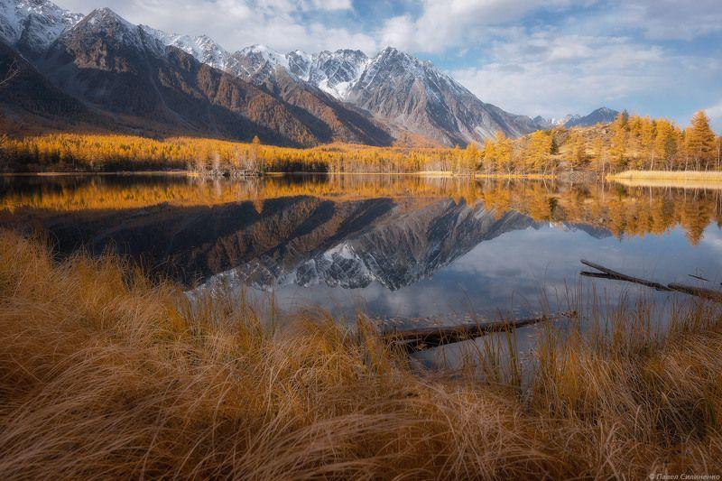 пейзаж, осень, лес, свет, желтый, алтай, озеро, отражение, горы На осеннем берегуphoto preview