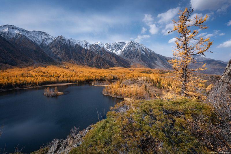пейзаж, осень, лес, свет, горы, желтый, алтай, озеро Катунский хребетphoto preview