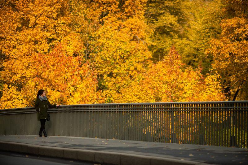 осень, санктпетербург Осень в Петербургеphoto preview