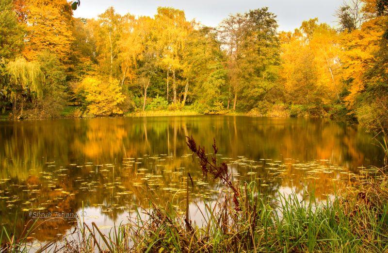 природа, осень, пруд, листья Осенний прудphoto preview