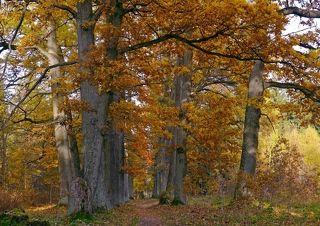Красочный октябрь