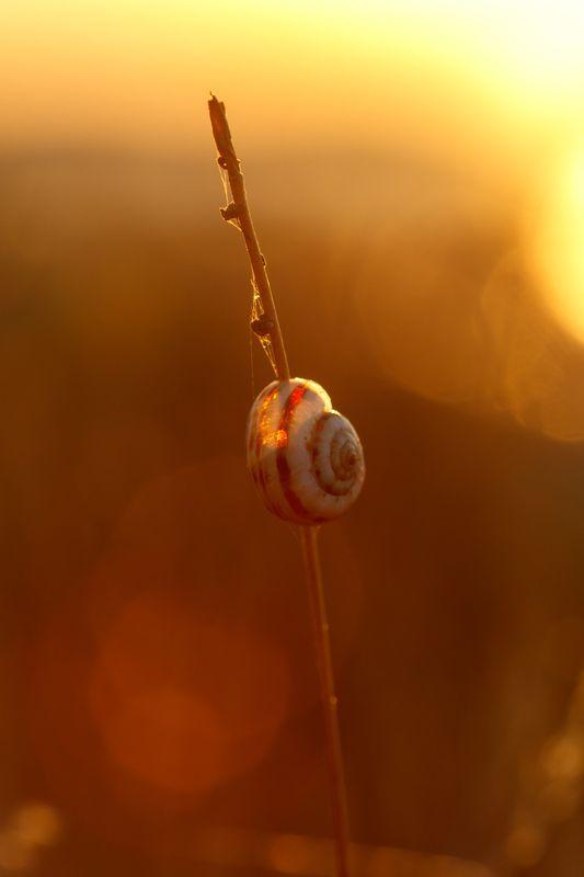 улитка, макро, закат, раковина Одинокая улиткаphoto preview