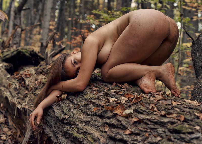 В осеннем лесуphoto preview