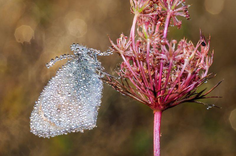 Лучшие друзья бабочек - бриллиантыphoto preview