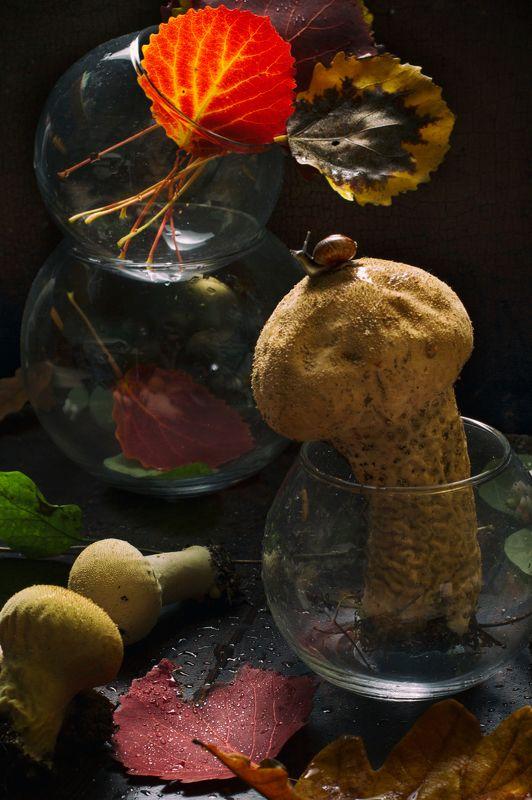 улитка,листья, осень, гриб С дождевикомphoto preview
