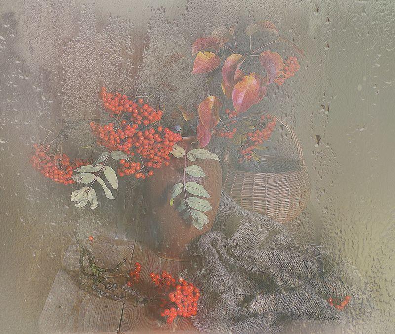 осень,капли,рябина,натюрморт,вера павлухина, Осень,осень...photo preview