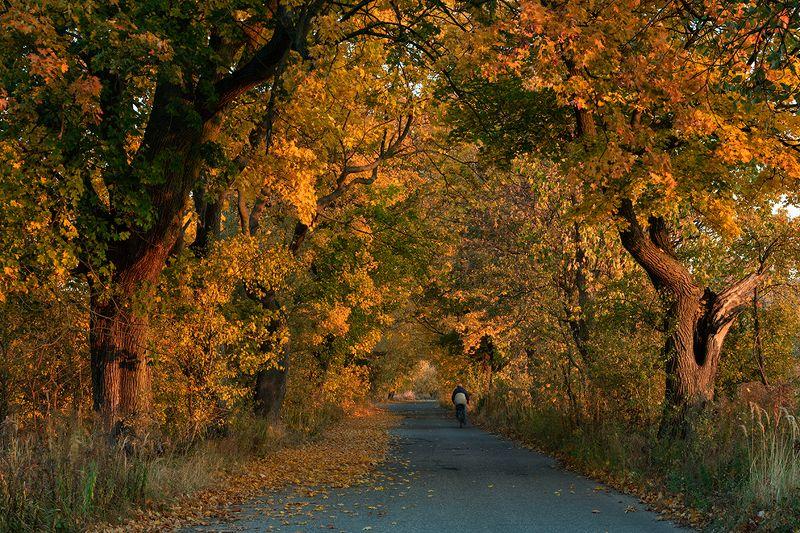 Autumn ridephoto preview