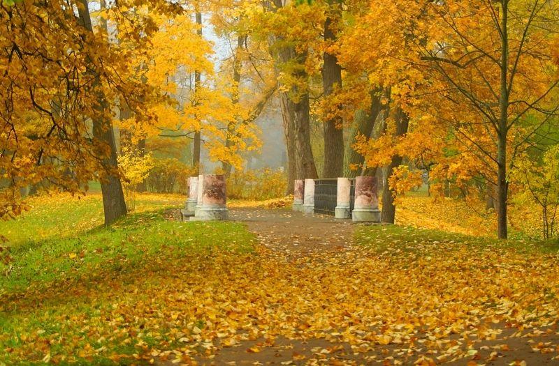 Autumn...photo preview