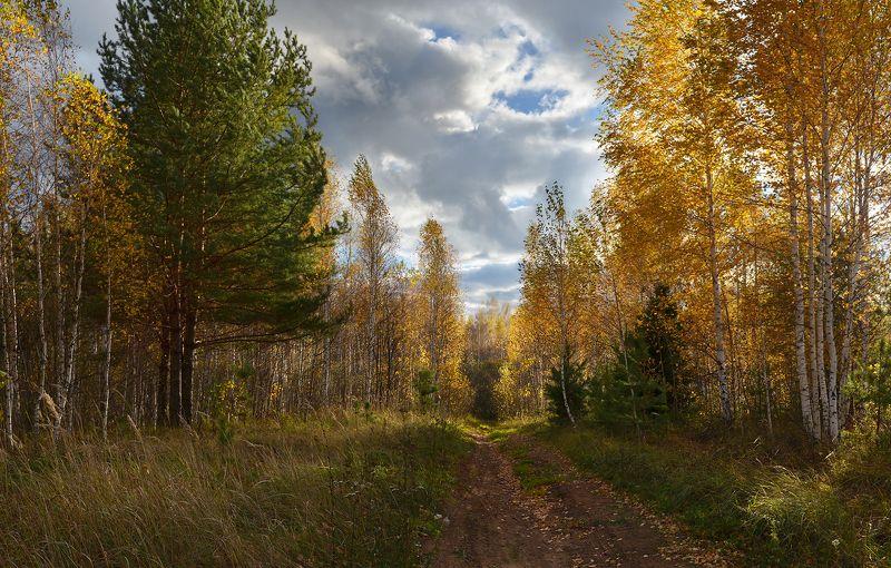 небо, облака, ветер, золотая осень, дорога, лес, солнечный свет Ветреный деньphoto preview