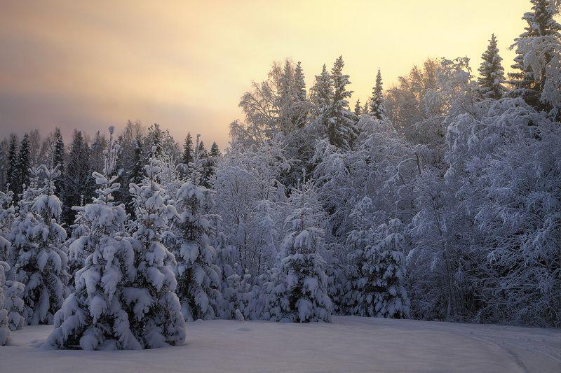 зима, закат, лес, парк, мороз, снег, вечер, поляна Морозный вечер на лесоной полянеphoto preview