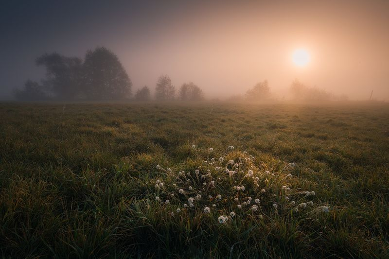 river fog sun mist dawn poland podlasie biebrza dark mood wildflowers Biebrza never neverland...photo preview