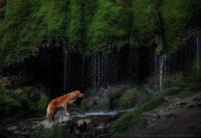 собака, природа, водопад photo preview