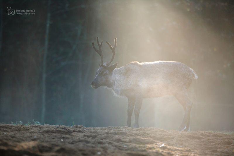 Туманный светphoto preview