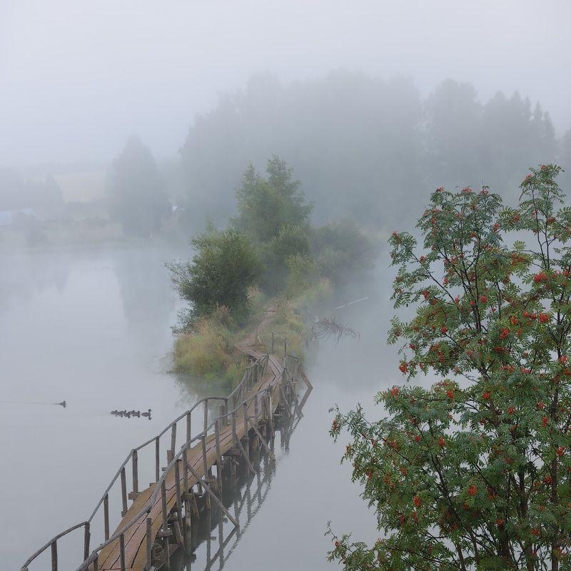 туман, август, утки, мост, пруд Тихое августовское утроphoto preview