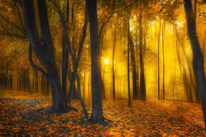 пейзаж, закат, лес, осень Золото осениphoto preview