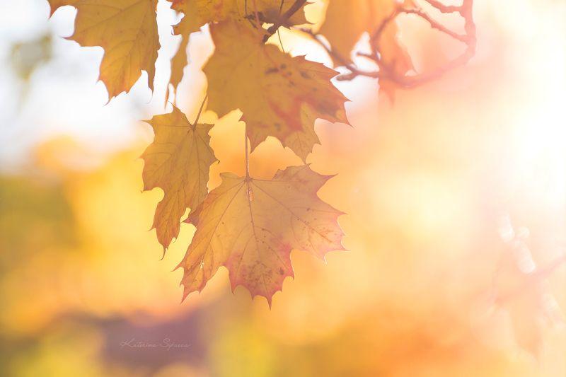 природа, осень Солнечно!photo preview