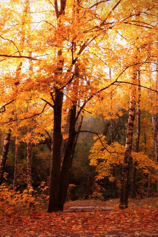 осень в Смоленскеphoto preview