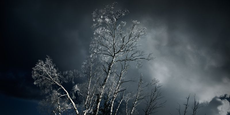 forest, birch, winter, serbia, nature, outdoor, storm , cold, snow, panorama, лес, береза, зима, сербия, природа, на улице, буря, холод, снег, панорама, White islandphoto preview