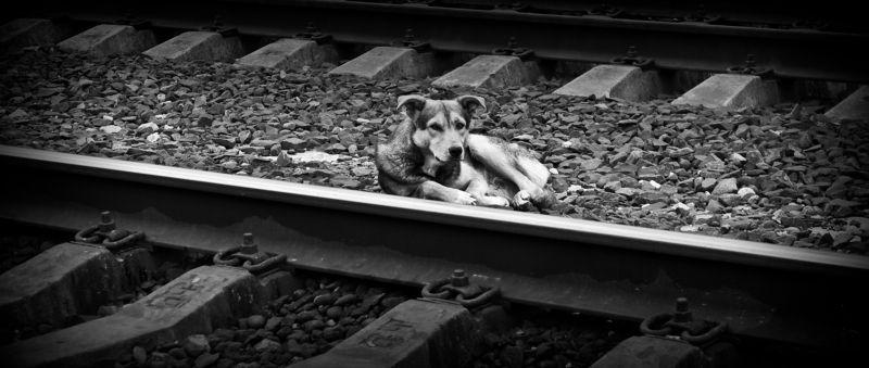 собака, пёс, животное, грусть, одиночка, собаки lonerphoto preview