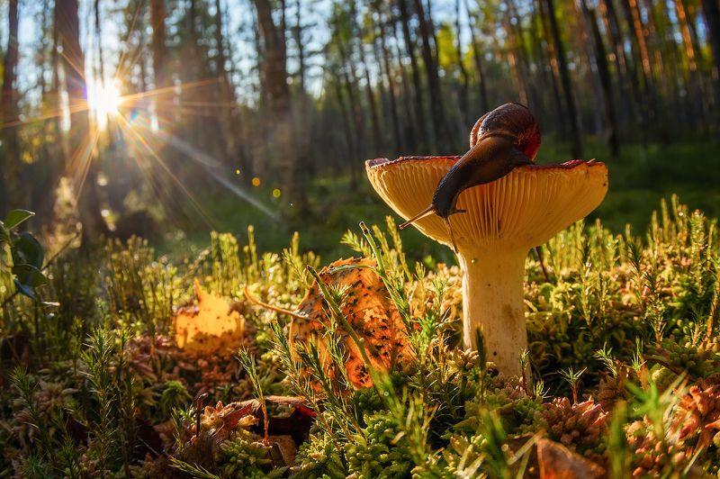 гриб улитка лес мох сыроежка из жизни улиток и сыроежекphoto preview