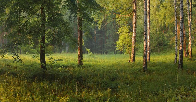 тёплый вечер, лес, травы, лето, июнь, солнечный свет Вечер после дождяphoto preview